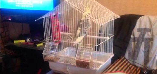 Как перевозить домашних птиц на самолете
