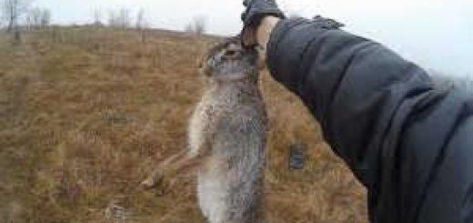 Погоня за зайцем