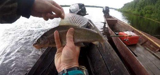 Рыбалка на хариуса и щуку