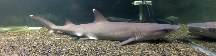 Сложности содержания акулы в аквариуме