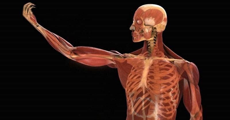 Интересные факты о теле человека