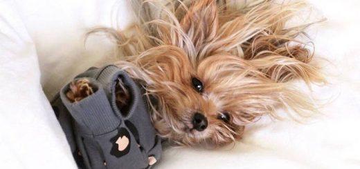 Фотосессия для собак