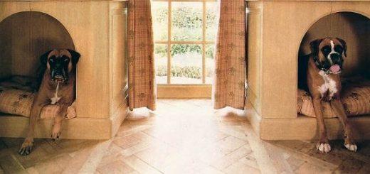 Интерьер дома для вашего питомца