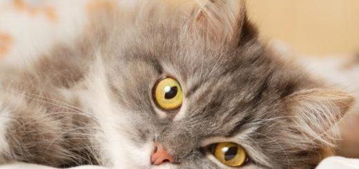 Если у кошки сопли