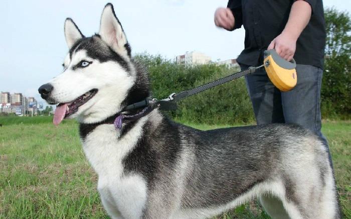 Как приучить собаку выполнять команду «Рядом!»