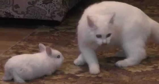 Кошка приютила кролика