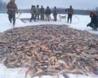 Лов карася неводом под льдом на диком озере