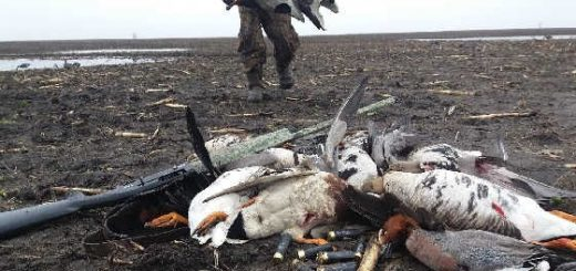 Лучшая охота на гуся