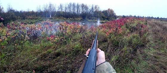 Охота с ружьем МР-155 в октябре