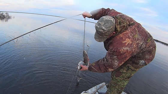 Нашли заброшенную сеть с рыбой