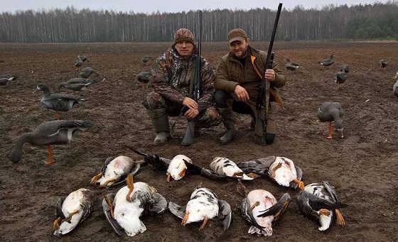 Охота на гуся весной в Беларуси