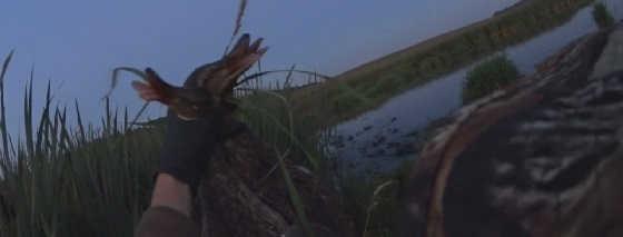 Охота на уток с манком