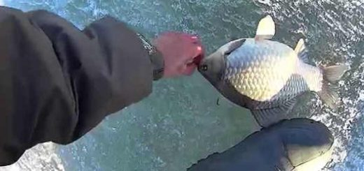 Рыбалка на крупного карася