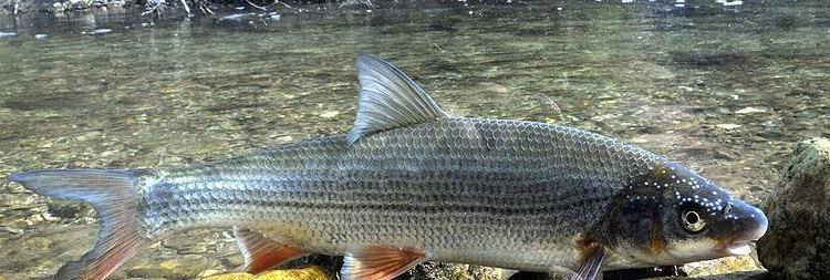 Рыбалка на подуста