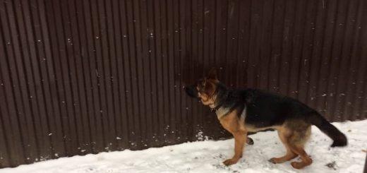 Отучить собаку лаять под забором