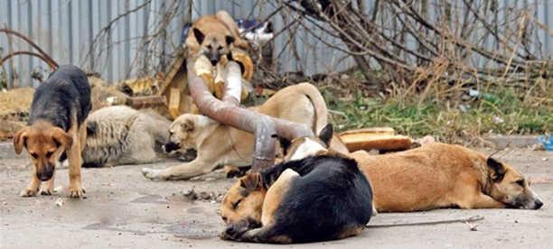 Легальная охота на животных без дома
