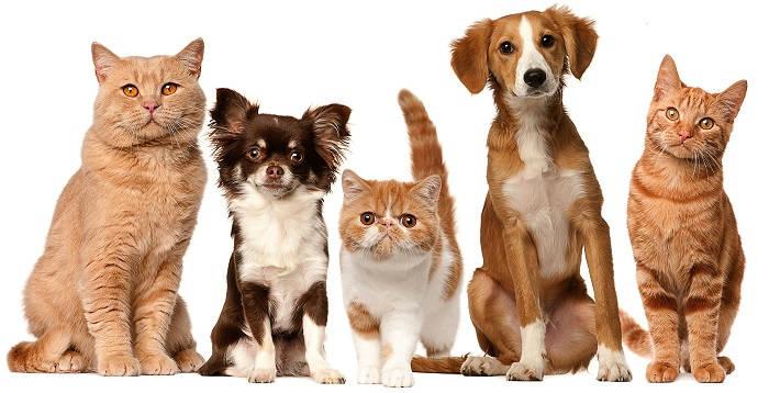 Собака и другие животные