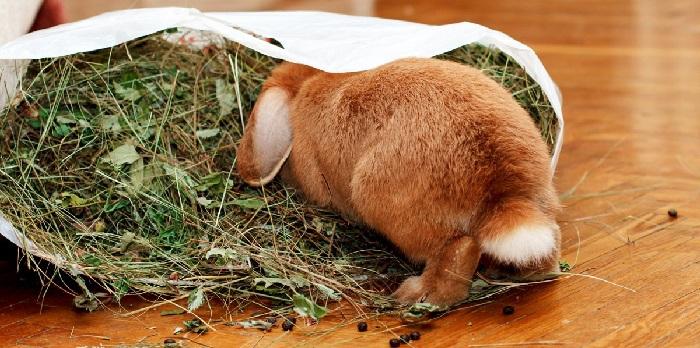 Свежий корм для кроликов
