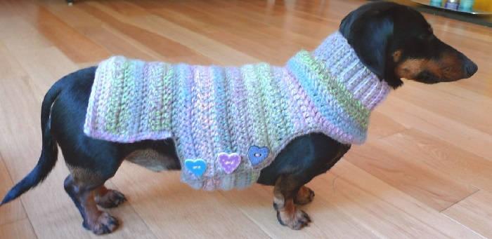 Свитер для собаки своими руками из старой кофты