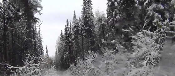 Будни в зимней тайге