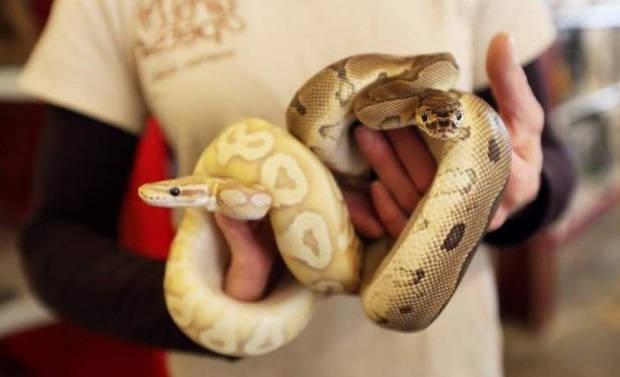 Правила ухода за домашней змеей