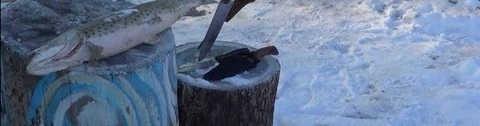 Как почистить замёрзшую рыбу