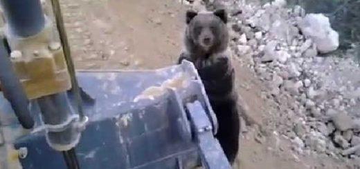 Добрый русский медведь