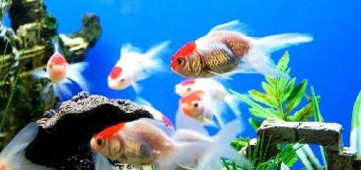 Дрессировка аквариумных рыб