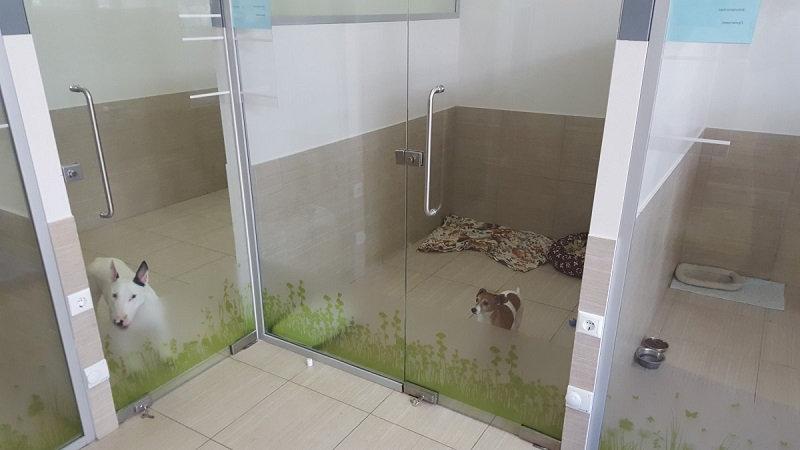 Гостиница для животных в Москве