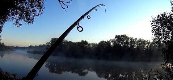 Активный клёв карася туманным утром