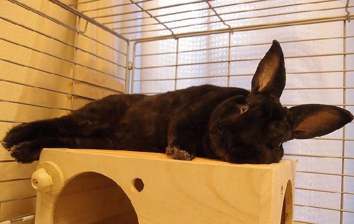Кролик – любимое домашнее животное