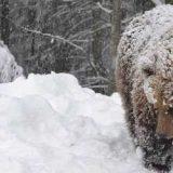 Медведь в гостя у геологоразведчиков