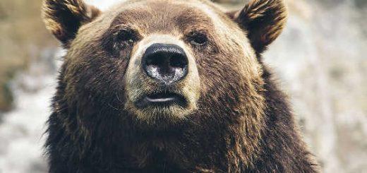 Баллон - защита от медведя