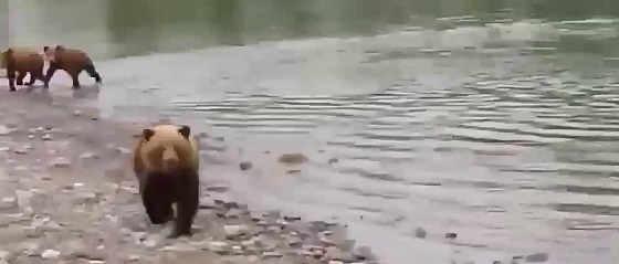 Медведица нападает на рыбаков