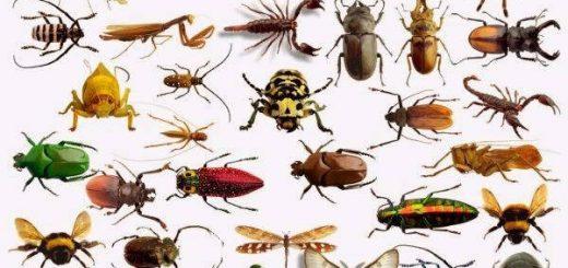 Способхраненияколлекцийживотных и насекомых