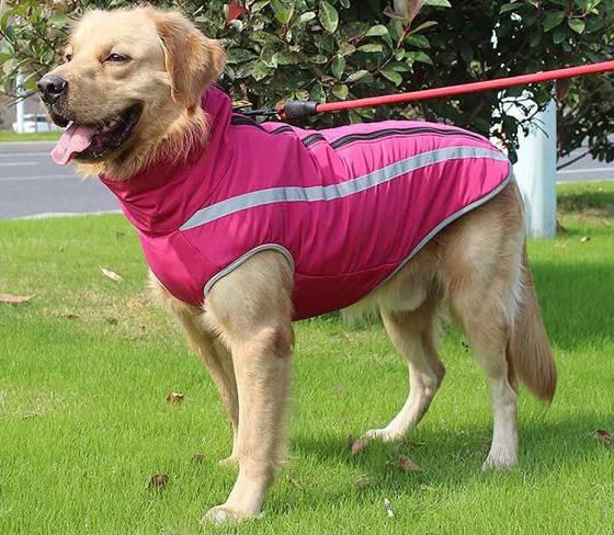 Непромокаемая куртка для собак