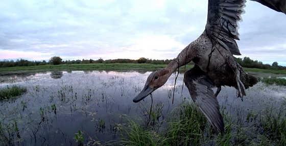 Охота на уток без оружия весной
