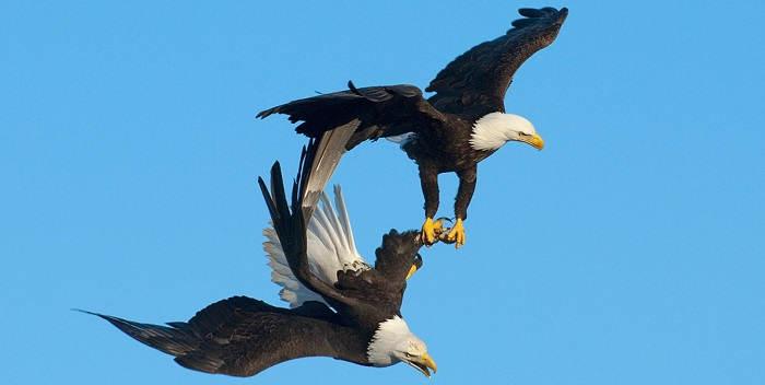 Орел - птица, овеянная божественной славой