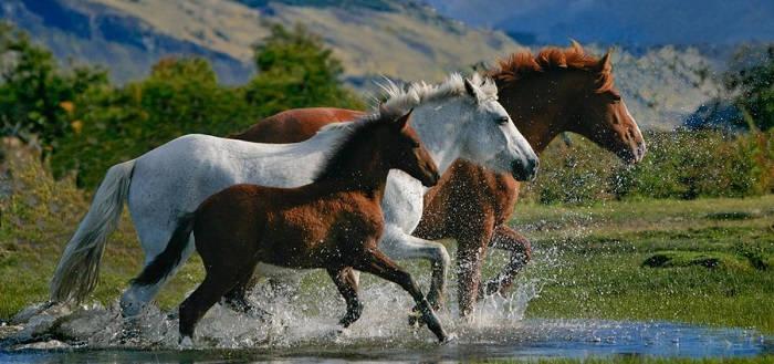 Какую породу лошади выбрать