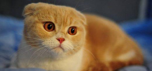 Помогите своей кошке победить рак