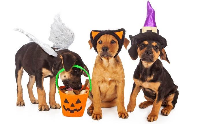 Одежда для собак на Хэллоуин