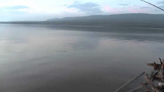 Рыбалка на Усть-Илимском водохранилище