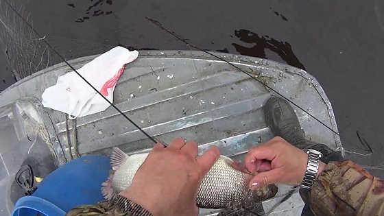 Весенняя ловля рыбы сетями на болоте