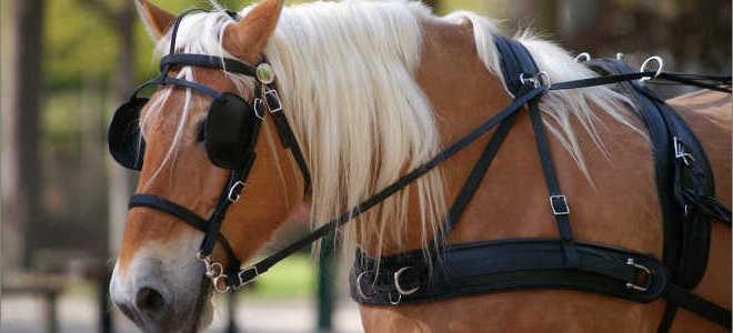 Зачем лошадям закрывают глаза в стойле