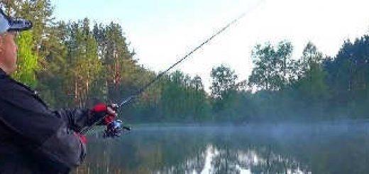 Щука на лесном озере