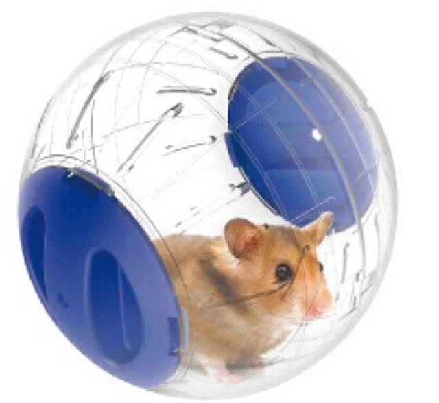 Использование прогулочного шара для хомяка
