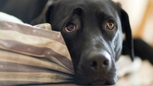 Домашние животные спасают семьи от ссор