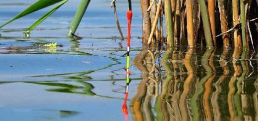 Ловля крупного карася на удочку поплавчанку с мормышкой