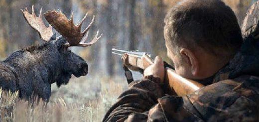 Ответственность за незаконную охоту
