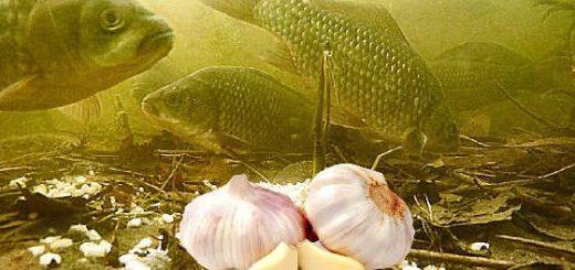 ПЕРЛОВКА С ЧЕСНОКОМ: Реакция рыбы